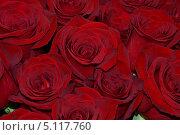 Розы. Фон. Стоковое фото, фотограф Любовь Лапухина / Фотобанк Лори
