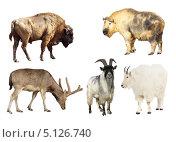 Копытные животные, коллаж. Стоковое фото, фотограф Яков Филимонов / Фотобанк Лори
