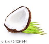 Купить «Кокос и пальмовый лист», фото № 5129844, снято 21 мая 2013 г. (c) Валентина Разумова / Фотобанк Лори