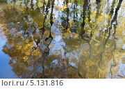 Осенние листья - отражение в воде. Стоковое фото, фотограф Наталья Наточина / Фотобанк Лори