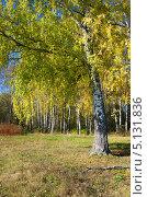 Купить «Осенний пейзаж с березами», эксклюзивное фото № 5131836, снято 6 октября 2013 г. (c) Елена Коромыслова / Фотобанк Лори