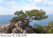 Купить «Пейзаж с сосной на скале. Крым», фото № 5136076, снято 10 сентября 2013 г. (c) Denis Kh. / Фотобанк Лори