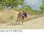 Собака с кольцом. Стоковое фото, фотограф Elena Baranovskaya / Фотобанк Лори