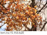 Осень. Стоковое фото, фотограф Svetlana Zavrazhina / Фотобанк Лори