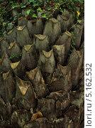 Купить «Текстура ствола пальмы», фото № 5162532, снято 28 июля 2013 г. (c) Татьяна Козырева / Фотобанк Лори