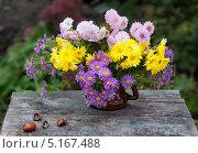 Купить «Осенние цветы и желуди», фото № 5167488, снято 13 октября 2013 г. (c) Короленко Елена / Фотобанк Лори