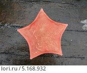 Купить «Морская звезда», фото № 5168932, снято 2 августа 2009 г. (c) Салякин Виталий Валерьевич / Фотобанк Лори