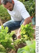 Купить «Человек работает в саду», фото № 5172332, снято 27 июля 2010 г. (c) Phovoir Images / Фотобанк Лори