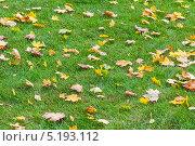 Купить «Желтые опавшие листья на зеленой траве газона», фото № 5193112, снято 3 октября 2013 г. (c) Владимир Сергеев / Фотобанк Лори