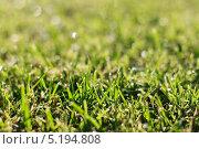 Утренняя роса на траве. Стоковое фото, фотограф Коптева Зоя / Фотобанк Лори