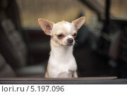 Авто-сторож. Стоковое фото, фотограф Андрей Павлов / Фотобанк Лори