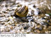 Улитка ползет по камням. Стоковое фото, фотограф Mariya Eremenko / Фотобанк Лори