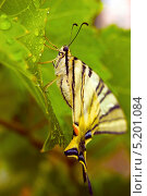 Бабочка. Стоковое фото, фотограф Mariya Eremenko / Фотобанк Лори
