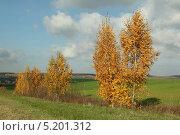 Осенний пейзаж. Стоковое фото, фотограф Геннадий чупругин / Фотобанк Лори