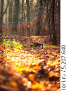 Купить «Осенний лес в солнечный день», фото № 5207640, снято 26 октября 2013 г. (c) Светлана Мамонтова / Фотобанк Лори