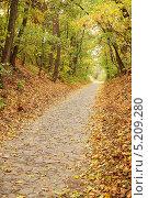 Купить «Аллея в осеннем парке», фото № 5209280, снято 9 октября 2010 г. (c) Юлия Маливанчук / Фотобанк Лори