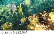 Купить «Подводный мир Красного моря», фото № 5222084, снято 24 сентября 2010 г. (c) Алексей Сварцов / Фотобанк Лори