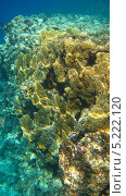 Купить «Морские кораллы», фото № 5222120, снято 21 сентября 2010 г. (c) Алексей Сварцов / Фотобанк Лори