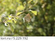 Бабочка на ветке. Стоковое фото, фотограф Дмитрий Казанцев / Фотобанк Лори