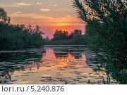 Тихая заводь. Стоковое фото, фотограф Аркадий Рыпин / Фотобанк Лори