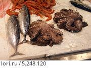 Морепродукты на рынке Сан-Лоренцо во Флоренции. Стоковое фото, фотограф Инна Горохова / Фотобанк Лори