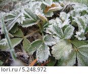 Первые заморозки. Стоковое фото, фотограф Роман Лапшин / Фотобанк Лори