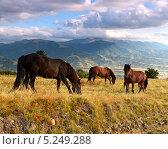 Купить «Лошади на карпатских лугах», фото № 5249288, снято 23 августа 2013 г. (c) Эдуард Кислинский / Фотобанк Лори