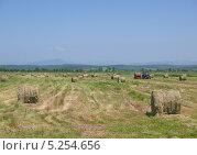 Купить «Прессованное в рулоны сено на лугу», фото № 5254656, снято 29 июня 2012 г. (c) Олег Рубик / Фотобанк Лори