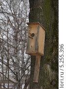 Купить «Деревянный скворечник на дереве в парке», фото № 5255396, снято 21 января 2019 г. (c) Денис Нечаев / Фотобанк Лори