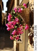 Декоративное растение на улице Флоренции (2013 год). Стоковое фото, фотограф Инна Горохова / Фотобанк Лори