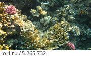 Купить «Подводный мир Красного моря», фото № 5265732, снято 21 сентября 2010 г. (c) Алексей Сварцов / Фотобанк Лори