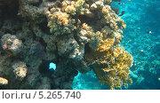 Купить «Подводный мир Красного моря», фото № 5265740, снято 21 сентября 2010 г. (c) Алексей Сварцов / Фотобанк Лори