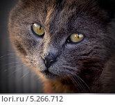 Кот. Стоковое фото, фотограф konstantin tatonkin / Фотобанк Лори