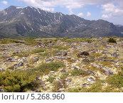 Горный пейзаж альпийских лугов Баргузинского хребта, озера Байкал (2013 год). Редакционное фото, фотограф Пыткина Альбина / Фотобанк Лори