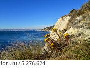 Купить «Яркий осенний пейзаж с желтыми цветами на фоне моря», фото № 5276624, снято 16 ноября 2013 г. (c) Игорь Архипов / Фотобанк Лори