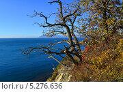 Купить «Яркий, контрастный осенний пейзаж с видом на море», фото № 5276636, снято 16 ноября 2013 г. (c) Игорь Архипов / Фотобанк Лори