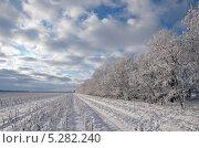 Зимнее поле. Стоковое фото, фотограф Татьяна Глущенко / Фотобанк Лори
