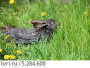 Купить «Кролик на зелёной траве», фото № 5284600, снято 19 мая 2013 г. (c) Марина Орлова / Фотобанк Лори