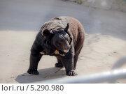 Медведь. Стоковое фото, фотограф Рогов Алексей / Фотобанк Лори