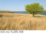 Вид на луг, реку и дерево. Стоковое фото, фотограф Михаил Бессмертный / Фотобанк Лори