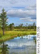Купить «Северный пейзаж с озером и болотом», фото № 5295336, снято 12 июля 2013 г. (c) Валерия Попова / Фотобанк Лори
