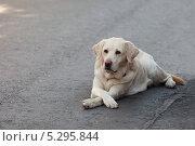 Грустный, печальный взгляд собаки. Стоковое фото, фотограф Vladimir Sviridenko / Фотобанк Лори