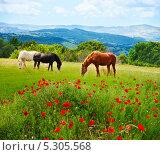 Купить «Лошади пасутся на лугу», фото № 5305568, снято 31 мая 2013 г. (c) Сергей Новиков / Фотобанк Лори