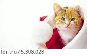 Купить «Милый котенок сидит в новогодней шапке», видеоролик № 5308028, снято 26 ноября 2013 г. (c) Серёга / Фотобанк Лори
