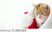 Купить «Кот сидит в шапке Санта-Клауса», видеоролик № 5308064, снято 26 ноября 2013 г. (c) Серёга / Фотобанк Лори