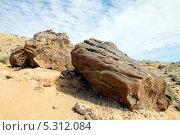 Купить «Окаменевшие стволы деревьев юрского периода. Пустыня Негев, Израиль», фото № 5312084, снято 22 ноября 2013 г. (c) Irina Opachevsky / Фотобанк Лори