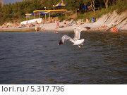 Купить «Парящая над водой», фото № 5317796, снято 12 августа 2010 г. (c) Татьяна Дигурян / Фотобанк Лори