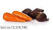 Купить «Морковь и свекла», фото № 5318748, снято 16 мая 2013 г. (c) Сергей Молодиков / Фотобанк Лори