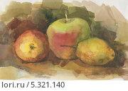 Этюд, яблоки и груша. Стоковая иллюстрация, иллюстратор Гузель Гайсина / Фотобанк Лори