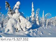 Снежная зима. Стоковое фото, фотограф Алексей Леонтьев / Фотобанк Лори